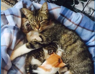 「ぼくの家族はみんな猫!」猫に育てられた子犬!兄弟は子猫♪