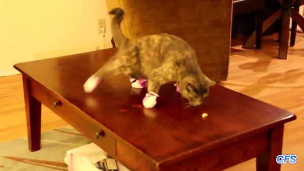 靴下を履いた猫たち「あわわわ気持ち悪いぃぃ!!!!」
