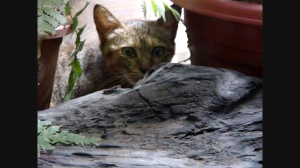 子猫と遊びたかったワンちゃんに向けるママの視線が怖すぎ!「次はタダじゃ済ません」