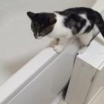 お水を出すとダッシュで飛んでくる子猫「見逃せないよね~!」