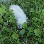 『そんなに怖かったのかい?ケガをしているのかと思ったよ』民家の草むらでずっと動けなかった子猫