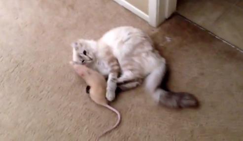 ネズミを抱きしめる猫ちゃん「だいすきにゃああ♡」
