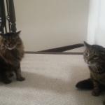 まるで狛猫!?通りたいワンちゃんの前に二匹の猫が立ちはだかる!
