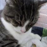 「お乳は出ないけど、気の済むまでどうぞ」子猫にお乳を吸われるオス猫さんが優しい♡