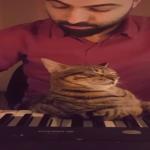 ピアノを聞きながら鍵盤の上で寝る猫!真ん中の鍵盤は使用不可w