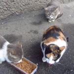 「ヤダ!あっち行って!…ご飯食べたいよぅ…」一人で食べたい派の猫ちゃんがかわいそカワイイw