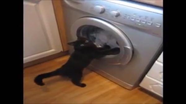「回れ、回れ!洗濯物!おいらが洗濯ををしてあげるぞ!」
