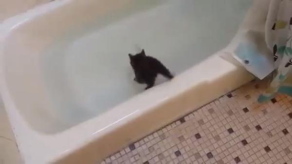 猫がジャンプ!落ちた先は...お湯の中「助けてぇ~」と大パニック