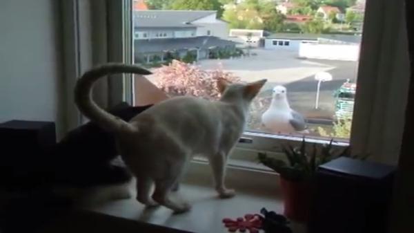猫だって鳥とお話しできちゃうよ☆窓越しに今日もご挨拶「友達になろうよ」