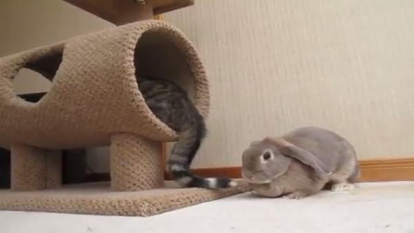 猫のしっぽが気になるうさぎ…なんだかんだ仲良さそうな二匹にほっこり(笑)