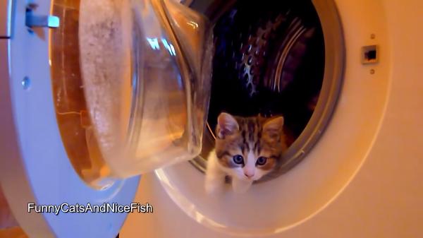 猫ちゃんたちの遊び場・ドラム式洗濯機♪やっぱり狭いところは落ち着くにゃ~
