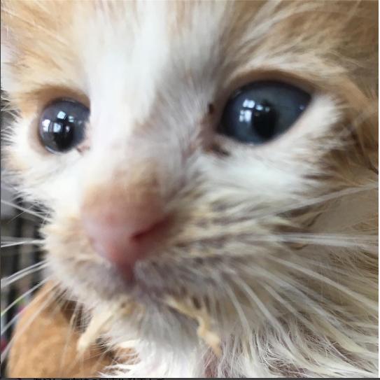 ド―ベルマンが彼女の膝に優しく置いた小さな子猫『えらいわ!咥えて来てくれたの?』