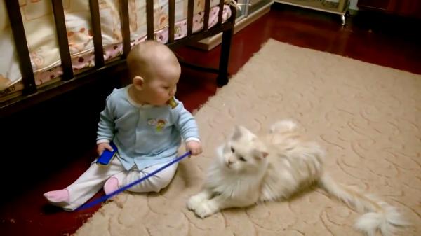 「こら、棒振り回したらだめだにゃ」と赤ちゃんに教育する猫ちゃん…しかしいつの間にかその棒に夢中(笑)