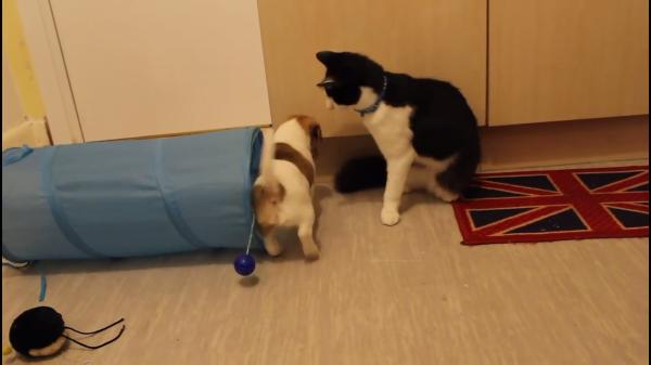 子犬たちがやってきた!!初めて子犬たちと会った猫ちゃんの反応とは…?