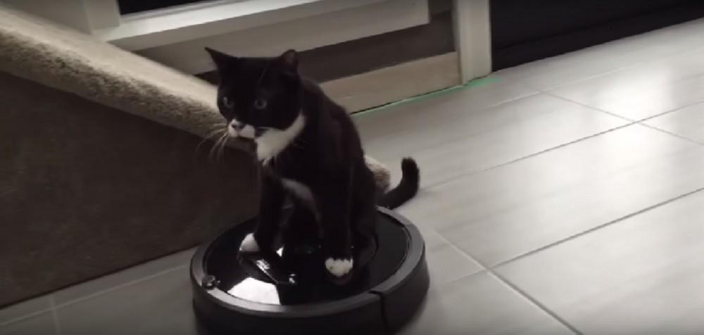 保護されたとき後ろ足がなかった子猫が見つけたロボット掃除機ルンバ!これって動くのに便利だにゃあ♪