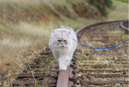 リードを持ったら旅の始まり☆病気を乗り越えた猫に飼い主さんが用意した猫のパスポート