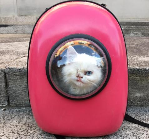 『君はもっと幸せになれるよ』カイロの路上で保護した片目の子猫を看病の末アメリカへ旅立たせた彼
