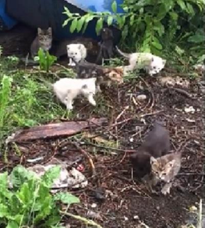 野良猫の保護をしようと思い、猫の鳴きまねをしたところナント!20匹の子猫たちが出てきてビックリ!