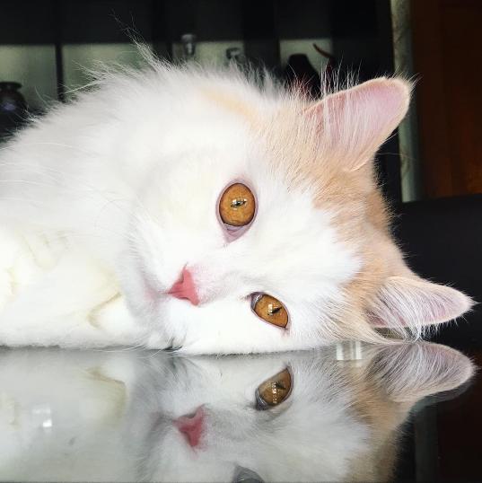 『見て、あの子と同じフワフワよ。』空っぽになった心を愛情で満たした亡くなった愛猫の面影を持つ猫