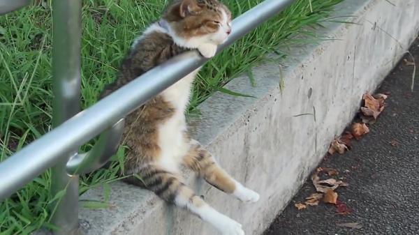 たそがれにゃんこ♪夕日に向かってお座りしてたそがれている猫ちゃんが可愛すぎた!!