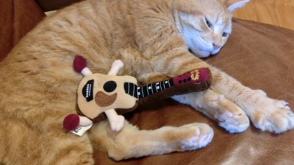 お昼寝タイムに無理矢理ギタリストにされてしまう猫ちゃんがかわいいw