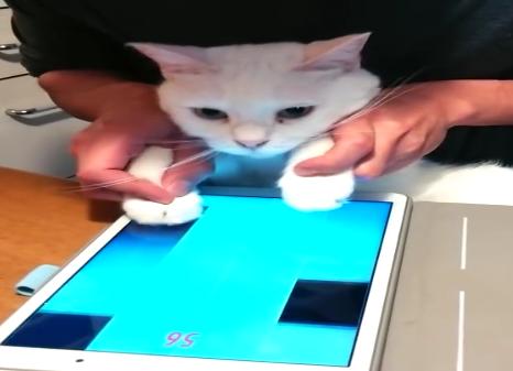アプリの音楽ゲームで一緒に共演♪飼い主さんに操られながら音ゲーをする猫ちゃんw