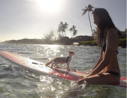 彼女とサーフィンを楽しむ海に愛された片目の猫『ホノルルの波は今日も最高だよ!』