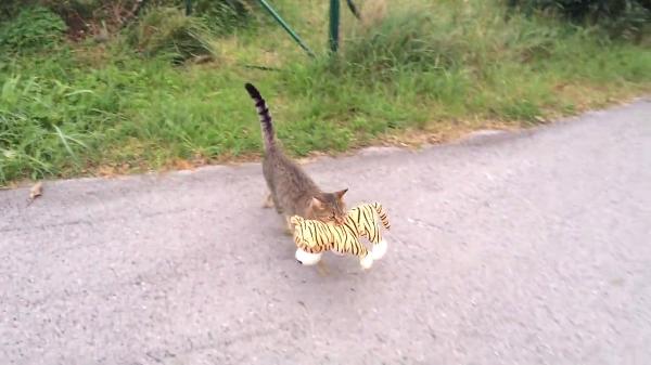 ぬいぐるみをくわえて運ぶ姿がキュート!猫の華麗なるジャンプをご覧ください