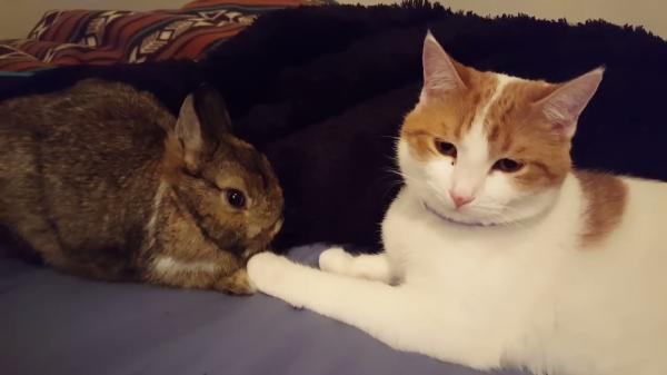 ウサギと猫が手をつないでる?ウサギが気になる猫がそっと手をウサギにおく瞬間!