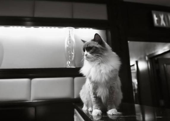 7年間務めたホテルを引退する猫☆マンハッタンのホテルに代々受け継がれるホテル猫の伝統
