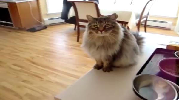 ジャンプ力が足りず棚に登るのに失敗する猫ちゃん…悲しそうな表情がシュール…(笑)