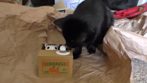 不思議な猫の貯金箱に本物の猫はどんな反応を示すのか?!腑に落ちない顔が可愛すぎる(笑)