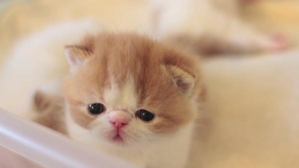産まれてまだ1ヶ月未満!超かわいい子猫たちの様子をのぞいてみよう♪