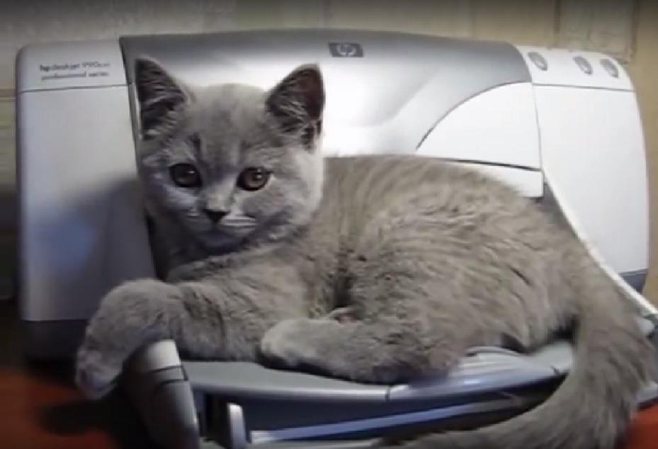 可愛い子猫がプリンターの上でくつろいでいたらナント、印刷が始まった!気の毒な結末に…