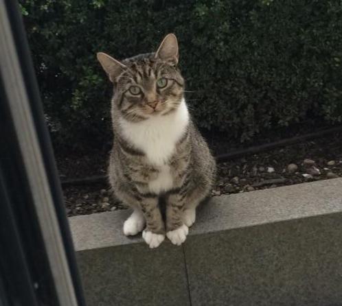 うちの猫と遊ぶために隣の猫が毎日待っているの『こんにちわ、お隣さん。今日も彼女と遊べますか?』