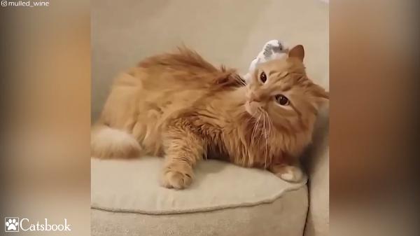 背中で鳴くインコの声に耳を傾ける猫「いつもいい声だね~」仲良しなふたり♡