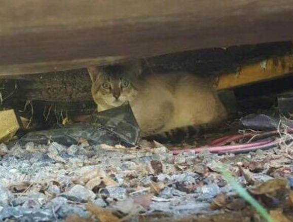 人に怯え、関わることを避け続けた野良猫が完全な家猫に『こっちの方が居心地良さそうなんだもん』