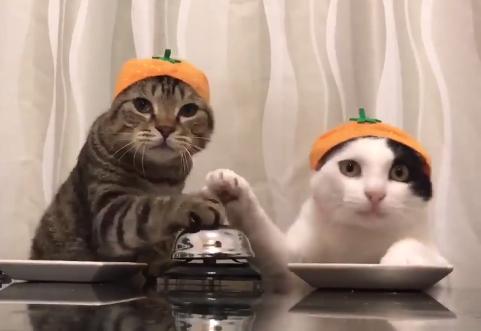 「おやつください」「ください」ベルで注文する二匹の猫!連打がカワイイ!!