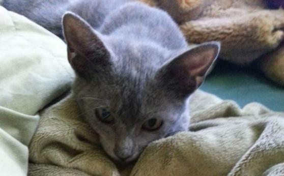 助けてくれた人は違ったけれど、彼女の友達と出会ったとたん猫は永遠の家族を彼女だと決めました