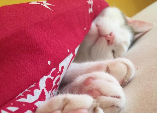 『ひどいケガをしているのね、寒かったでしょう』真冬の嵐に出会った汚れて傷ついたやせっぽちの猫