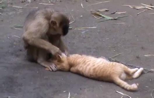 猿「かゆいとこない?」猫「こっちもやって~♡」仲良しの猿と猫!