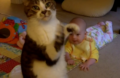 「赤ちゃんのお世話してるよ!ご褒美に抱っこして?」ベビーシッター猫のカワイイおねだり♡
