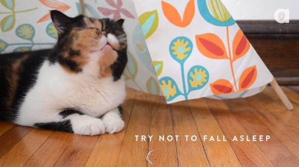 「これ、ぼくの隠れ家??」猫のためのDIYに挑戦!