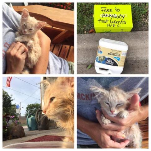 『欲しい方ご自由にどうぞ!』そう書かれた箱に放置された子猫『私たちで子猫を元気にしてあげたいわ』