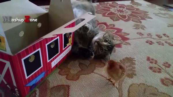 「こんなにも仲良くなれるの?」猫と小動物が仲良く遊ぶ姿にびっくり!