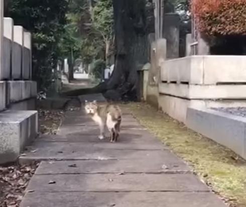 アメリカ人の彼女が愛してやまない谷中霊園の地域猫と人々『私が大好きな東京の隠れた宝石』