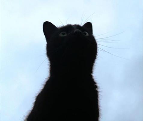 『あなたの鳴き声があれば、めざましのアラームはいらないわね』豪雨の翌日歩道を這っていた生後1日の子猫