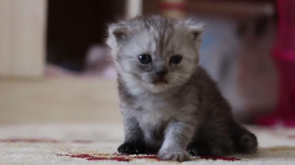 かわいい子猫と母猫の絆!そして子猫のかわいいヨチヨチ歩きにも注目です♡