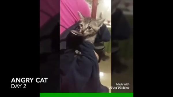 威嚇をするも。。少しづつ心開く保護された子猫ちゃん♡