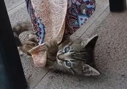 飼い主さんのスカートが気になる子猫☆ぶら下がって遊ぶ様子がキュート♡